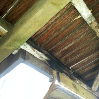 Fungal-Rot-on-Deck-Joists-and-Beams
